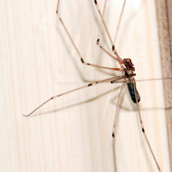 Spiders, Pest Control in West Brompton, World's End, SW10. Call Now! 020 8166 9746